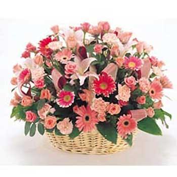 鲜花礼品-春天的阳光
