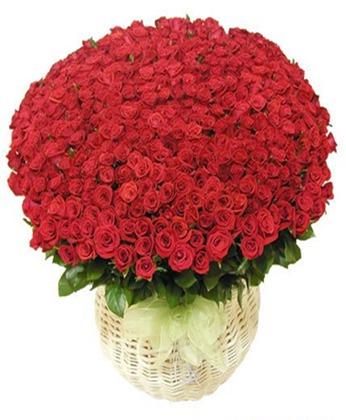订花-爱你每一天