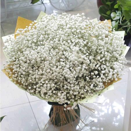 鲜花网站-满天星 A款