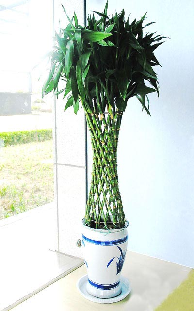 南昌绿植花卉-富贵笼