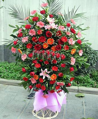 东莞鲜花:艳阳高照