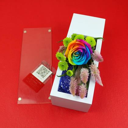 定州永生花:彩虹玫瑰 最美遇见
