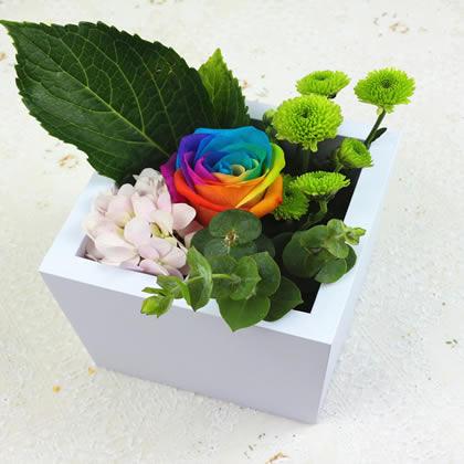 东莞永生花:彩虹玫瑰 爱的真言