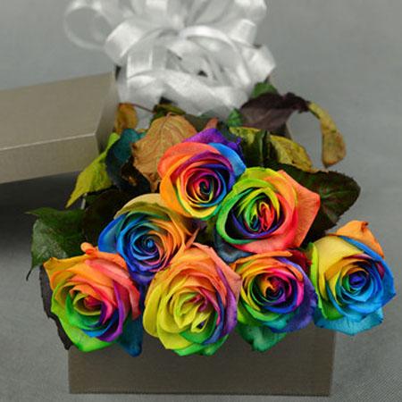 驻马店永生花:彩虹玫瑰-爱的代价