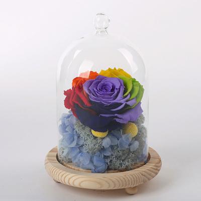 合肥永生花:玻璃罩彩虹花 蓝绣球
